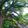 天照大神〈卑弥呼〉の一族を祭る筑紫〈邪馬台国〉の自然