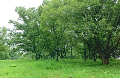 落葉樹の森