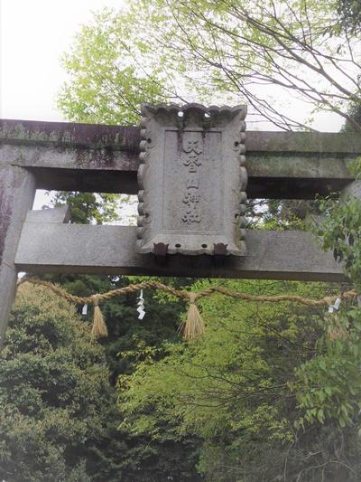 天香山神社と新緑のははかの木