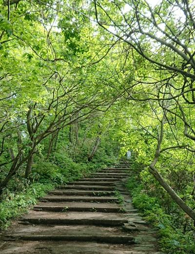 弥彦山(やひこさん)の山頂への道